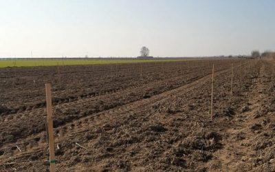 Εφαρμογή AGLEV SI 200 σε νέα φύτευση φουντουκιών (Βαφέϊκα, Ξάνθης)