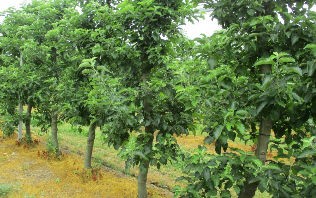 Εφαρμογή AGLEV SI 200 και ALBIT Plus σε δέντρα μηλιάς